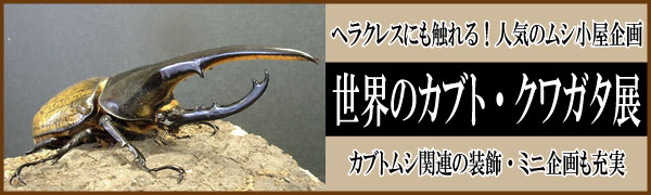 kabukuwa