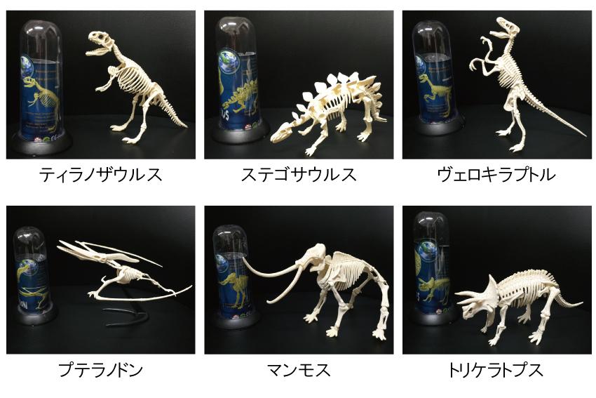 3D恐竜骨格パズル